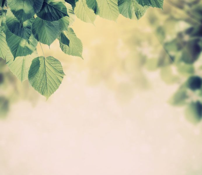 Vintage spring background with lovely flowering tree branches